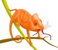 橙色动画片变色蜥蜴 免版税图库摄影