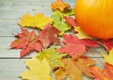 橙色南瓜和槭树叶子构成 库存图片