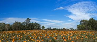 橙色南瓜在室外农夫市场上 库存图片