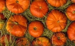橙色南瓜秸杆背景自然收获秋天, symmetri 免版税库存照片