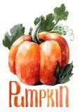 橙色南瓜 手在白色背景的图画水彩与标题 皇族释放例证