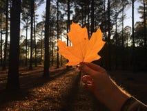橙色叶子在自然秋天森林  图库摄影