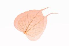 橙色叶子静脉 库存照片