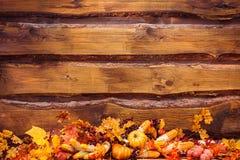 橙色叶子,南瓜,玉米,蘑菇,胡椒,在Th的大蒜 库存图片