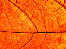 橙色叶子 库存照片