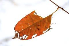 橙色叶子 库存图片