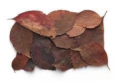 橙色和棕色秋叶框架 免版税图库摄影