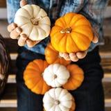 橙色和白色南瓜在Child's手上在10月,正方形 免版税库存图片
