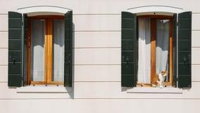橙色和白色毛皮猫在与等待绿色的快门的一个窗口前面坐得到里面 免版税库存照片