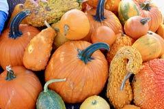 橙色和绿色南瓜和金瓜宏观背景纹理 图库摄影