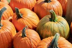 橙色和绿色南瓜宏观背景纹理 免版税库存图片