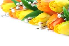 橙色和黄色郁金香边界 库存图片