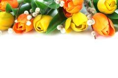 橙色和黄色郁金香边界 库存照片