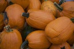 橙色和绿色新伐南瓜堆了在多雨,泥泞的农村南瓜补丁的上流 免版税库存图片