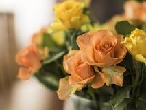 橙色和黄色玫瑰 免版税库存照片