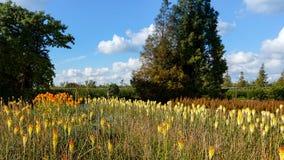 橙色和黄色花的美好的领域 免版税图库摄影