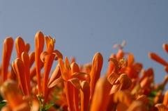 橙色喇叭 库存图片