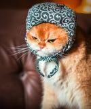 橙色在沙发的猫佩带的帽子 库存照片