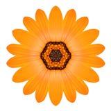 橙色坛场花装饰品 被隔绝的万花筒样式 免版税库存照片