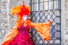 橙色孔雀夫人(2) 免版税库存照片