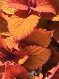 橙色室外植物 免版税库存照片
