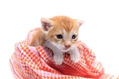 橙色小小猫 免版税库存图片