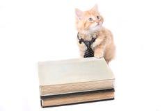 橙色小猫吃 免版税库存照片