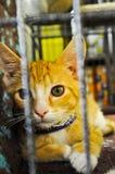 橙色小猫猫笼子看 库存照片