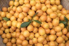橙色小 库存照片