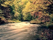 橙色山毛榉叶子盖的石河 在水面上的分支的新鲜的五颜六色的叶子 库存图片