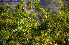 橙色工厂 免版税图库摄影