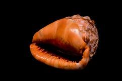 橙色巧克力精炼机海壳 库存照片