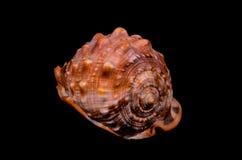 橙色巧克力精炼机海壳 库存图片