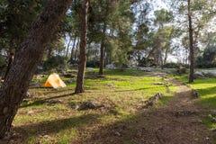橙色帐篷在森林里 免版税图库摄影