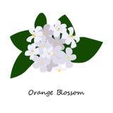 橙色开花花 皇族释放例证