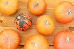 橙色心情秋天 库存照片