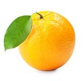 橙色成熟 库存图片