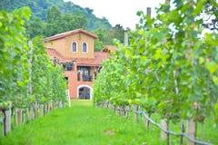 橙色房子在葡萄园里 免版税图库摄影