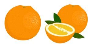 橙色整体和一半桔子 lemons lime 桔子的传染媒介例证在白色背景的 向量例证