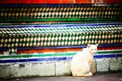橙色无家可归的猫在一个寺庙居住在泰国 库存照片