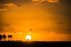 橙色日落在有棕榈和seaguls的加利福尼亚 免版税库存图片