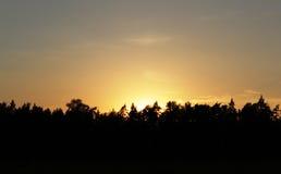 橙色日落在森林里 库存图片