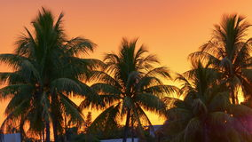 橙色日落天空棕榈树图4k迈阿密海滩美国 股票录像