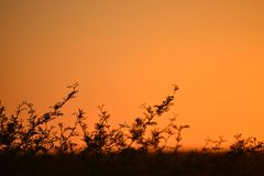 橙色日落风景 库存照片