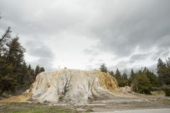橙色春天土墩在黄石 免版税图库摄影