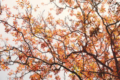 橙色春天在树自然摘要背景离开 图库摄影
