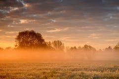 橙色有薄雾的日出 免版税库存图片