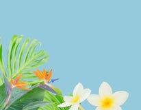 橙色木槿花 图库摄影