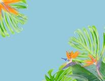橙色木槿花 免版税库存图片