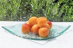 橙色杏子在水小河 库存照片